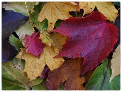 automne011