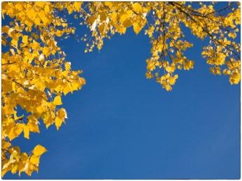 automne014
