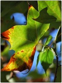 automne015