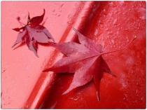 automne016