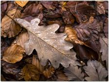 automne020