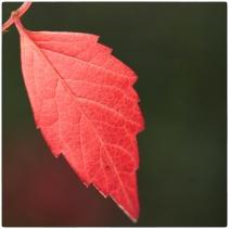 automne09