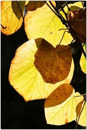 automne010
