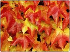 automne017