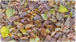 automne018