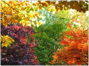 automne019