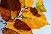 automne321