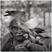 pigeons4785