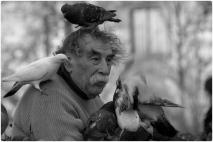 pigeons4786