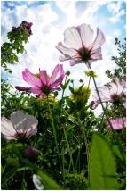 fleurs147