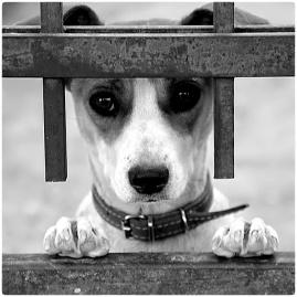 chien11