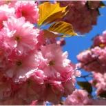 printemps14587